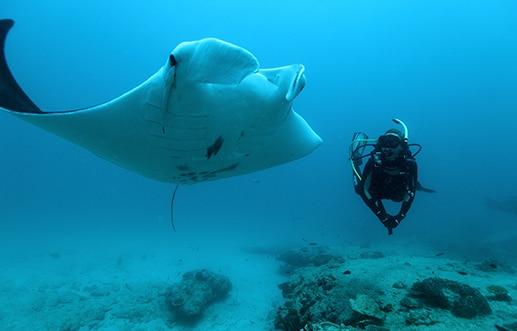 Dive Ningaloo Liveaboard - Mantaray - Lighthouse Bay