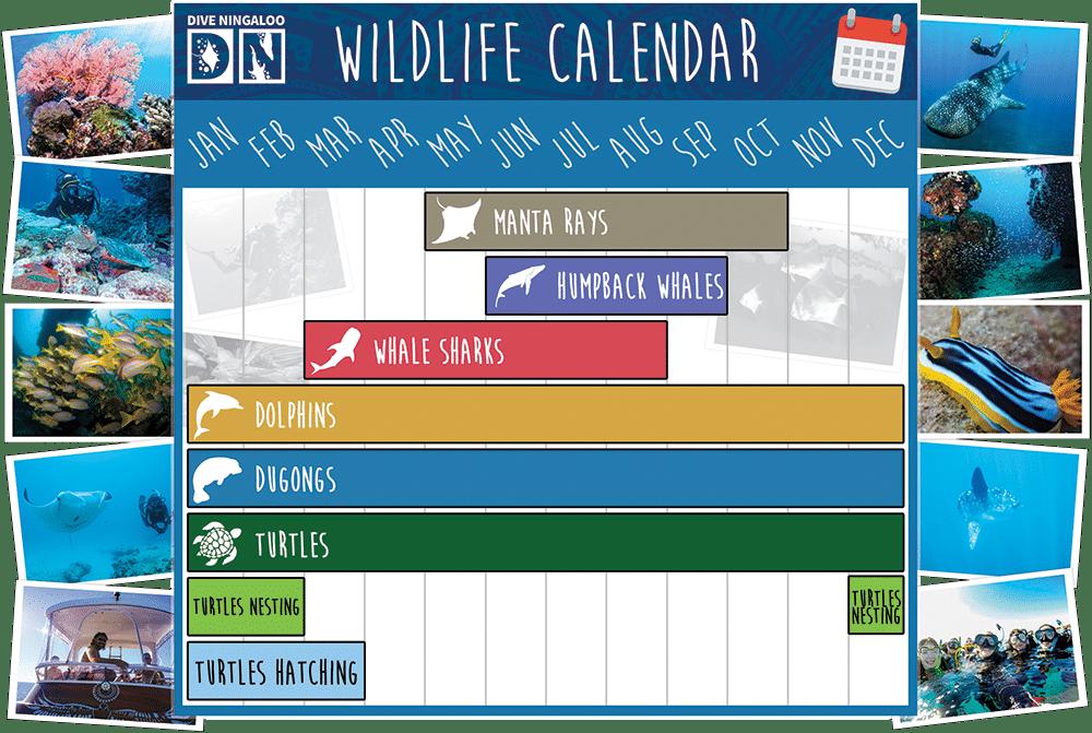 Dive Ningaloo Liveaboard - Wildlife Calendar